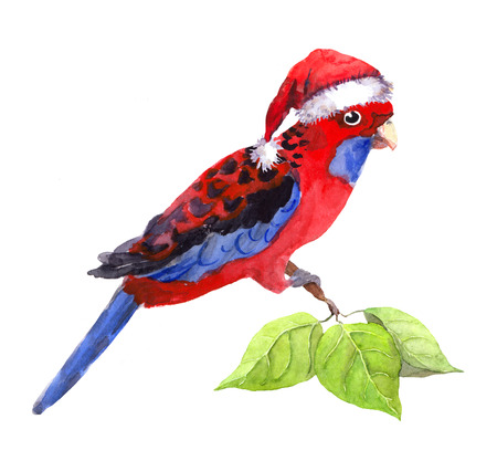 aquarel: Exotic character new year parrot in red santas hat. Watercolor winter tropical bird