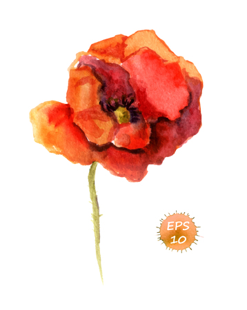 aquarell: Poppy flower isolated. Watercolor hand drawing vector