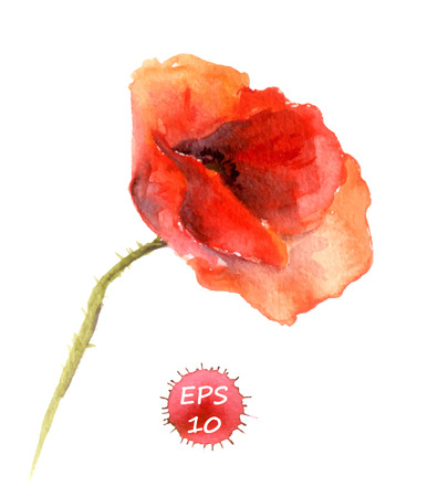 poppy seeds: Poppy flower isolated. Watercolor hand drawing vector