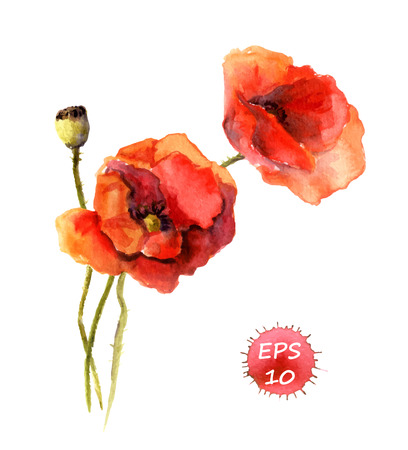 Poppy flower isolated. Watercolor hand drawing vector