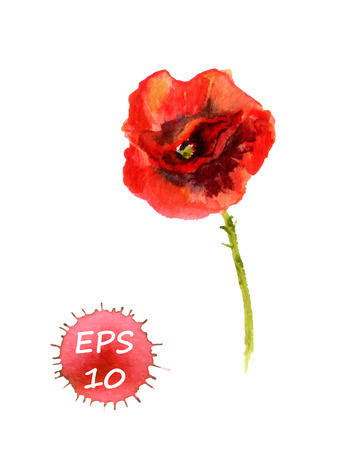 aquarel: Poppy flower isolated. Watercolor hand drawing vector
