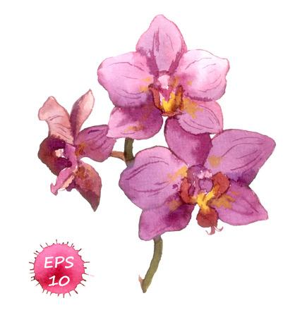 orchidee: Un fiore isolato di orchidea, disegno a mano acquerello Vettoriali