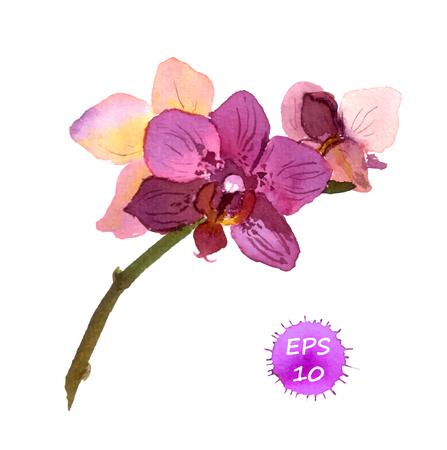 Eine isolierte Blume Orchidee, Handzeichnung Aquarell Vektorgrafik