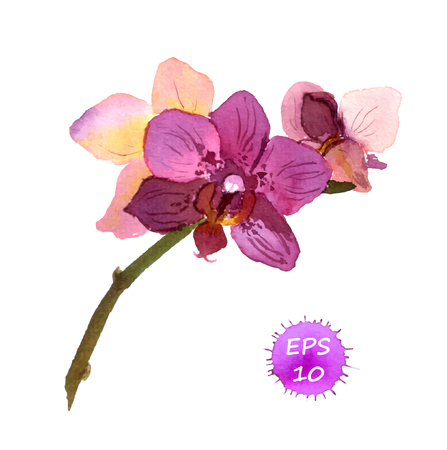 phalaenopsis: One isolated flower of orchid, hand drawing watercolor