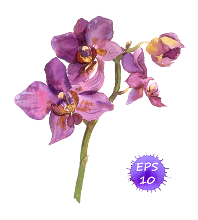 One isolated flower of orchid, hand drawing watercolor