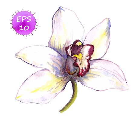 nature one painted: One isolated flower of orchid, hand drawing watercolor