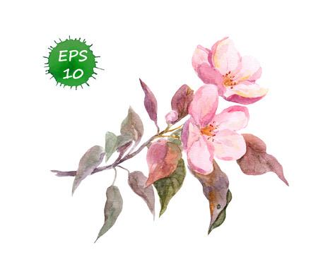 Pink fruit tree flower: apple cherry plum and sakura. Watercolor