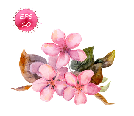 aquarel: Pink fruit tree flower: apple cherry plum sakura. Watercolor isolated Illustration