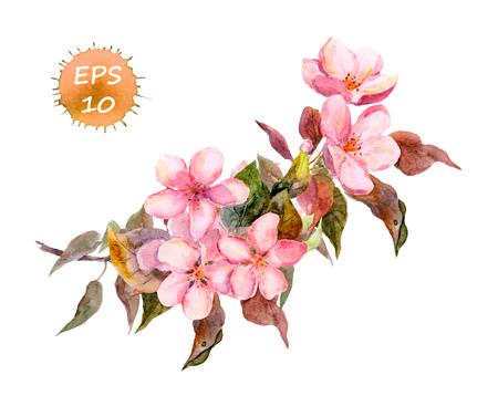 핑크 과일 나무 꽃 : 사과 벚꽃 매화 사쿠라. 수채화 벡터 격리