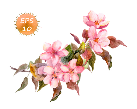 plum flower: Pink fruit tree flower: apple cherry plum sakura. Watercolor vector isolated