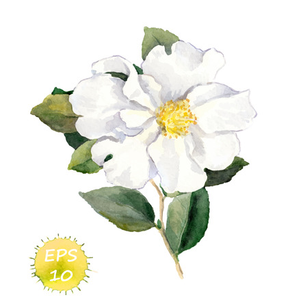 White flower with leaves. Watercolor botanical vector isolated Illustration