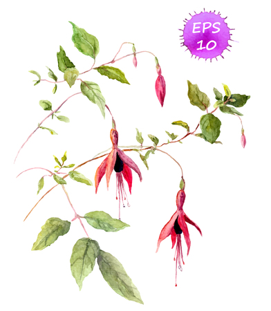 Fuchsia pink flower - watercolor painted picture, vector isolated Иллюстрация