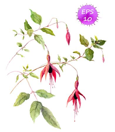 Fuchsia roze bloem - aquarel geschilderde beeld, vector geïsoleerde Stock Illustratie