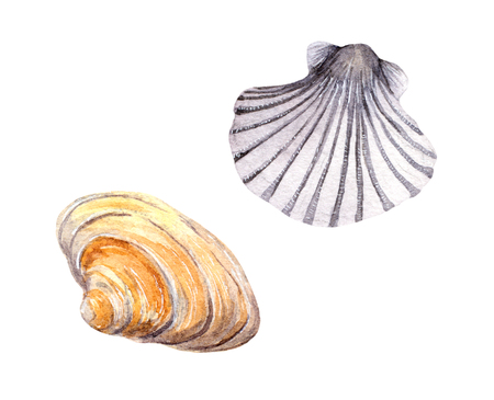 aquaculture: Sea shell swatch on white background. Watercolor drawing