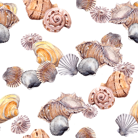 lagoon: Sea shell swatch on white background. Watercolor drawing