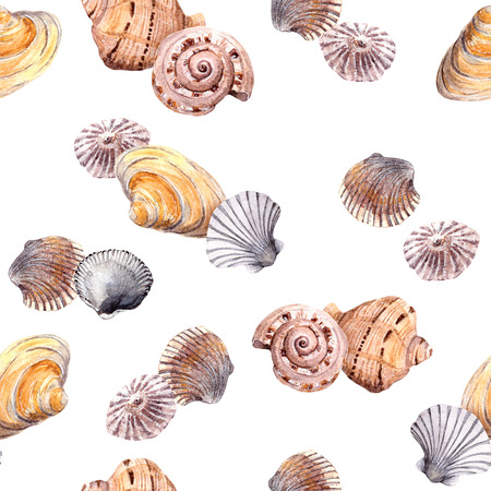aquarel: Sea shell swatch on white background. Watercolor drawing