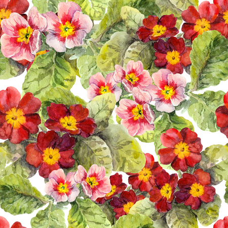 primrose: Primrose flowers. Seamless floral background. Watercolor hand made