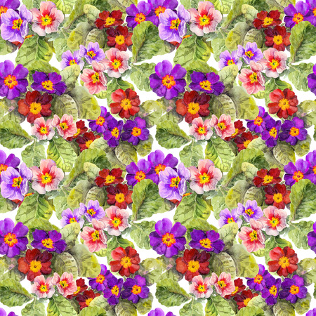primula: Primrose flowers. Seamless floral background. Watercolor hand made