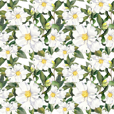 magnolia: Foral pattern with white flowers magnolia. Watercolor
