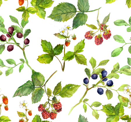 color backgrounds: Repeating pattern with wild herbs and forest berries - raspberry, strawberry, bilberry. Watercolor. Stock Photo