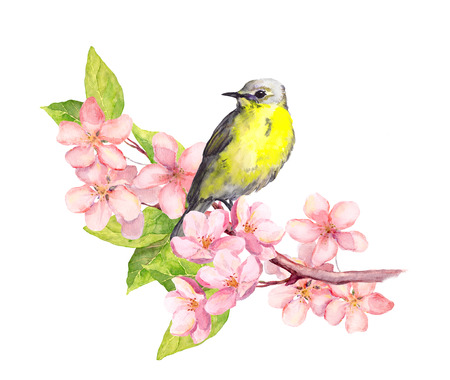 Bird on blossom branch with sakura or cherry flowers. Watercolor