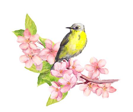 Vogel op bloesem tak met sakura of kersen bloemen. Waterverf Stockfoto