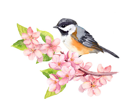 Bird on blossom branch with pink apple flowers. Watercolor