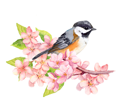 Bird on blossom branch with spring sakura flowers. Watercolor