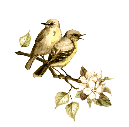 siena: Two song birds on spring branch with leaves and flowers. Vintage sepia watercolor