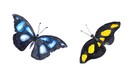 exotic butterflies: Exotic butterflies. Watercolor hand painted vibrant drawing