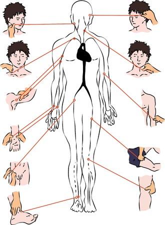 arteries: First help - scheme of arteries. Vector scheme Illustration