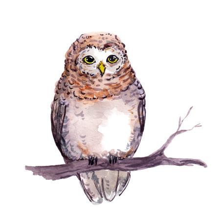 Owl bird. Watercolor cute cartoon animal at branch