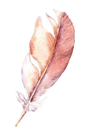 aquarelle: Watercolor hand painted illustration feather. Aquarelle art