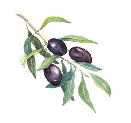 Olijftak met zwarte olijven Groenten en bladeren. Waterverf