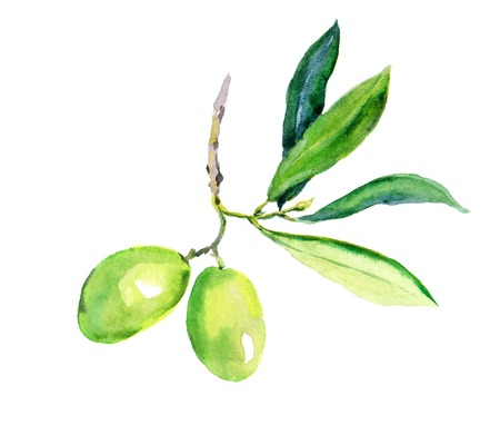Olive branch with green olives vegetables and leaves. Watercolor Фото со стока