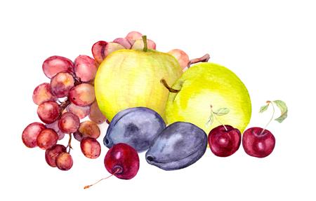 Watercolor fruits: apple, grape and cherry plum - watercolour art