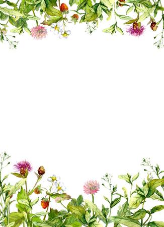 桜の花、春の草、ハーブ。花のフレーム枠水彩画カード 写真素材