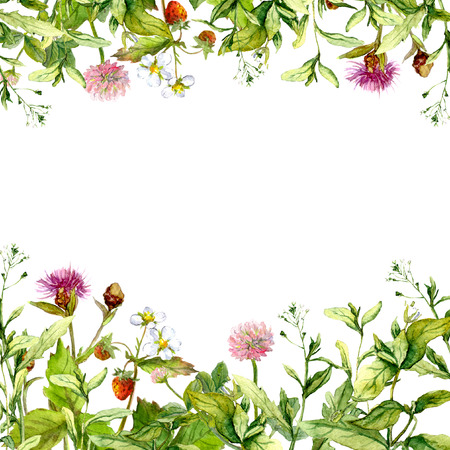 Meadow flowers, garden grass, herbs. Floral frame pattern for card or blank. Watercolor