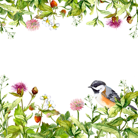 Blossom flowers, wild grass, spring herbs and bird. Floral border pattern for card or blank. Watercolor
