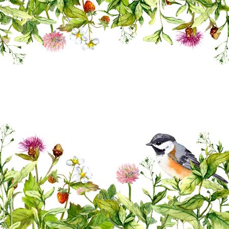 Flor de las flores, pastos, hierbas de primavera y aves. patrón de la frontera floral para la tarjeta o en blanco. Acuarela Foto de archivo - 61278707