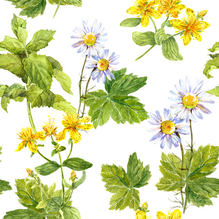 repeated: Field of flowers, meadow of herb: chamomile, hypericum, mint. Herbal seamless repeated floral pattern. Watercolour Stock Photo