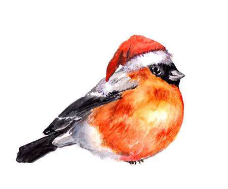 Watercolor christmas bird - bullfinch in the red hat