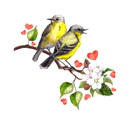 birds on branch: Two song birds on spring branch with leaves and flowers. Watercolor