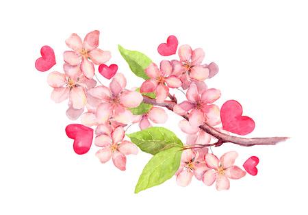Tak van appelbloesem, Kersenboom bloemen, Sakura. Vintage aquarel botanische illustratie Stockfoto