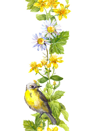 Cute bird in wild herbs and flowers. Floral watercolor. Seamless border frame Stock Photo