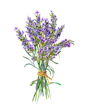 Lavender flowers bunch. Watercolor Stockfoto