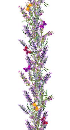 Lavender seamless frame and butterflies. Watercolor stripe Фото со стока