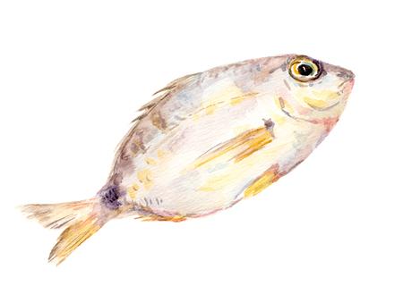 Fish. Watercolor illustration Stock Photo