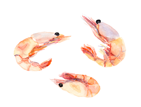 Shrimps, prawns set. Watercolor Stock Photo