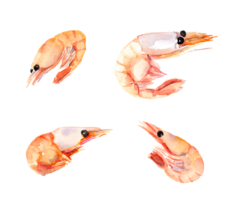 Watercolor painted shrimps, prawns set